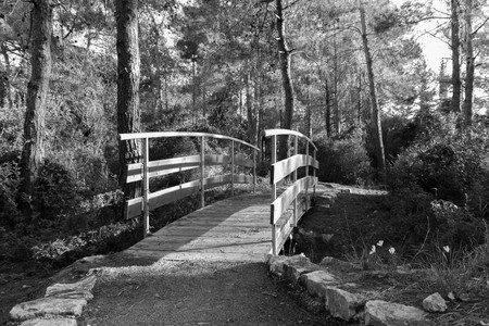 morn: The bridge across the stream in the early morning in the park in the forest Hanita, Israel
