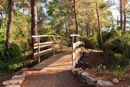 aslant: The bridge across the stream in the early morning in the park in the forest Hanita, Israel
