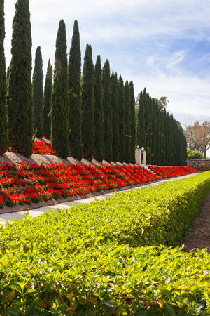 shrubbery: Decorative fence of green bushes, geraniums and rows of trees in the city park Stock Photo