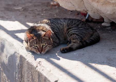 pies bonitos: El gato rayado gris en la mañana miente y toma el sol en el terraplén del mar Mediterráneo en la ciudad de Nahariyya