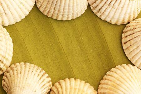 Sea shell frame