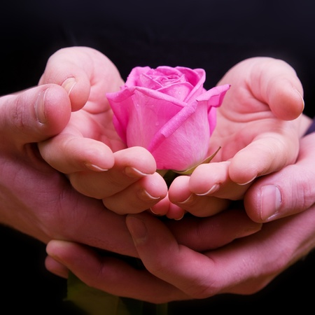 flowers boy: Boys and girls hands with pink rose flower Stock Photo