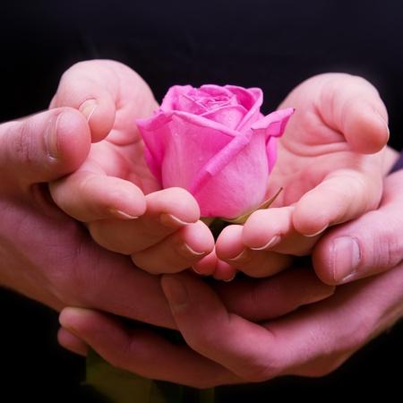 mujer con rosas: Ni�o y las manos de ni�a de color rosa con flor rosa Foto de archivo