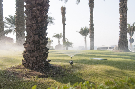 Irrigation process of green lawn and palms near the hotel
