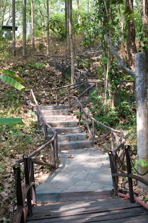 One path in tropical forest in Chiang Mai park