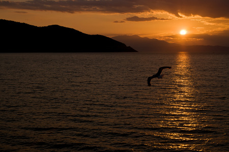 Seagull silhouette against sunset over the sea