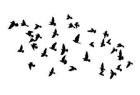 Siluetas del vector de aves que vuelan, contorno negro aislado