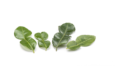 Four branches of lime leaves Stock Photo