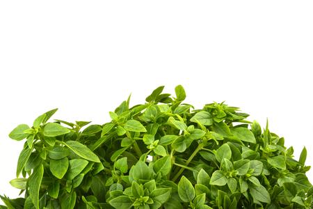 Fresh basil bush isolated on white background. Copy space Stock Photo