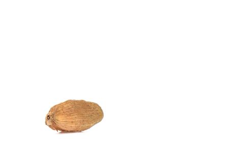 One seed of cardamom isolated on white background. The box of cardamom is the seeds of an Indian tree from the ginger family. Copy space