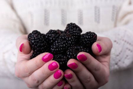 Blackberry berries in the palms of the girl. A girl with a pink manicure holds blackberries in her palms. Stock Photo