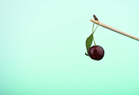 Ripe cherry on a stick with a green backlit background. Copy space.