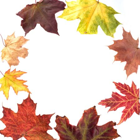 Multicolored autumn maple leaves in a circle on a white background. In the center is a place for text.