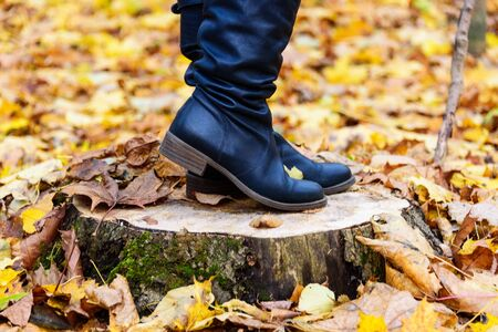 Stylish woman boots on a background of autumn fallen leaves. Women's boots on a stump.