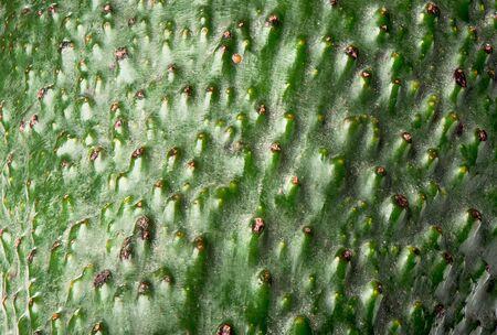 Macro shot of an unpeeled avocado fruit. Peel texture of avocado. Zdjęcie Seryjne