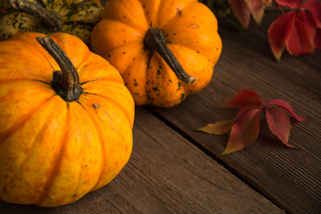 yellow pumpkins with red vine leaves horizontal photo, Stock Photo