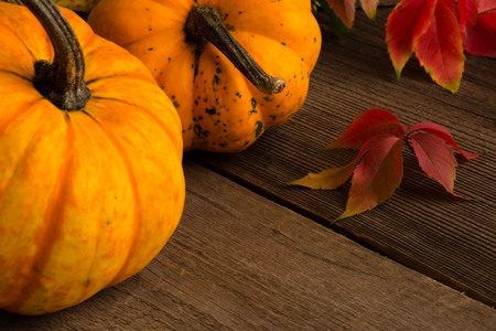 two yellow pumpkins with red vine leaves horizontal photo, front view,