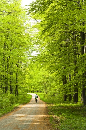 Forest with man on bicycle photo