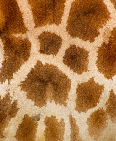 Authentic animal wool texture photo