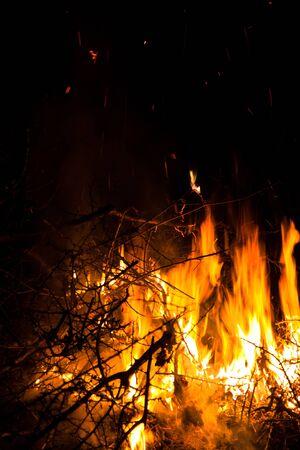 buisson: Vue rapprochée des buissons de burning