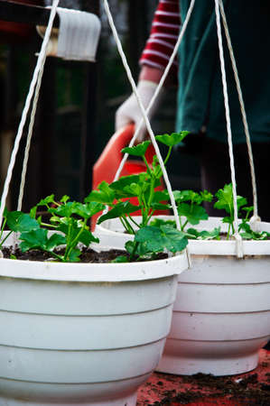 vegetate: resh green plants in garden ready to planted