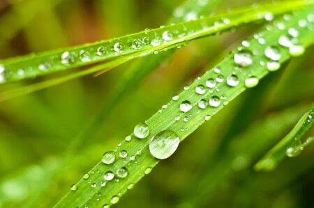 Green grass with water drops on it photo