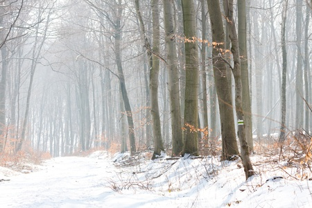 Winter Landscape of a forest in fog photo