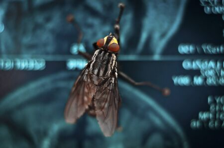 exasperation: Big red eyed fly on blue abstract background