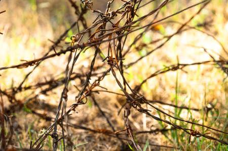 barbed wires: Alambres de p�as sobre fondo apocal�ptico
