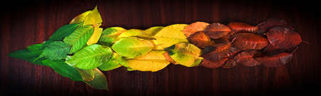 arow: Photo of colorful leaves showing the direction on wooden background Stock Photo