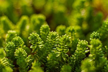 Fresh green plant ready to grow Stock Photo - 12134648