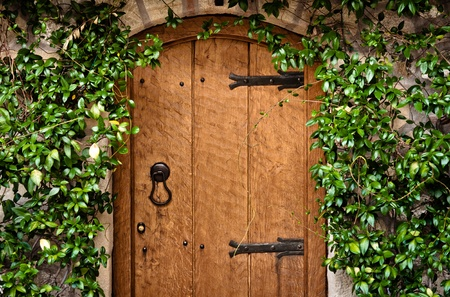 Traditional wooden door with green plant photo