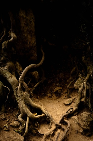Roots of an ancient tree in dark colors Stock Photo - 12987081