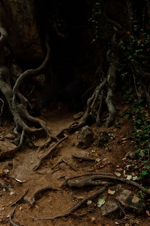 dark jungle green: Roots of an ancient tree in dark colors Stock Photo