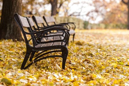 Autumnal park with bench and leaves photo