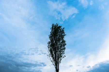 One tree against blue sky background photo