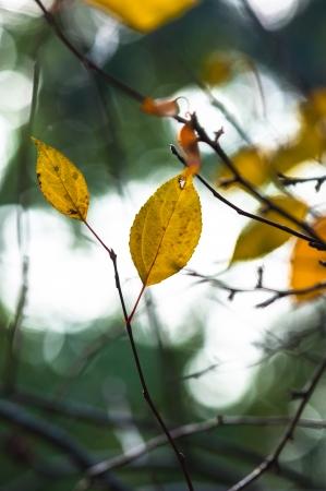 colores calidos: Foto oto�al en un bosque en colores c�lidos
