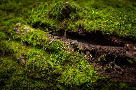 Moss on tree trunk closeup photo photo