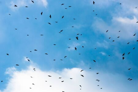 A large group of crows against blue sky photo