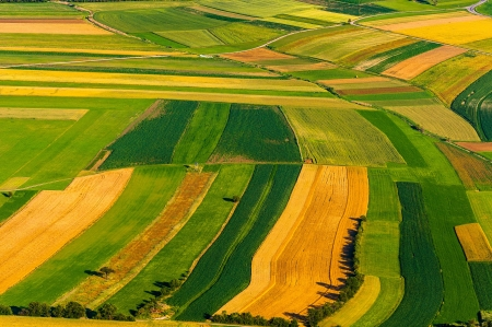 yellow agriculture: Big field ready to harvest aerial view Stock Photo