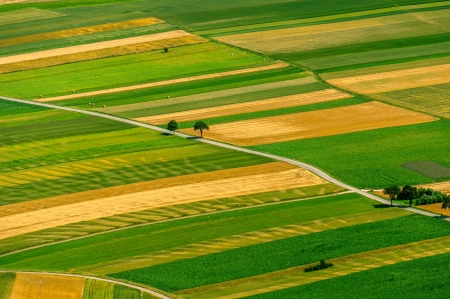 crop cultivation: Green fields aerial view before harvest at summer
