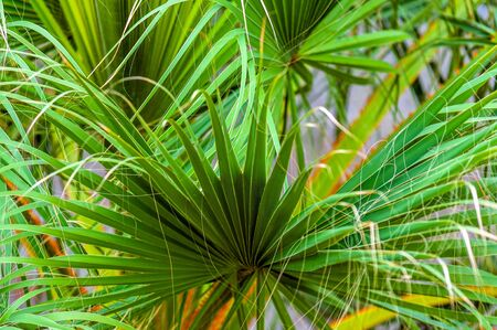 Closeup photo of a palm tree outdoors photo