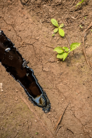Oil contaminating the soil on the ground photo