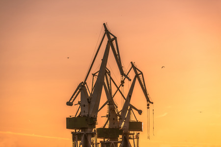 Industrial cargo cranes in the dock at sunset photo