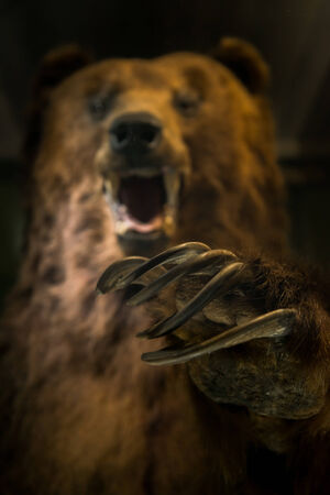 Dangerous bear ready to hunt with scary claws
