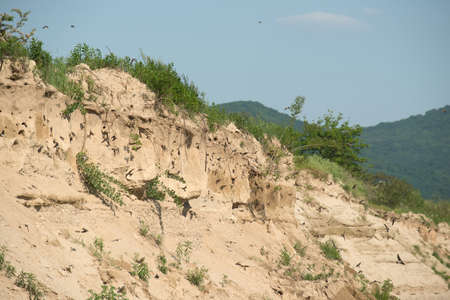 sand quarry: The nests of swallows in a sand quarry Stock Photo