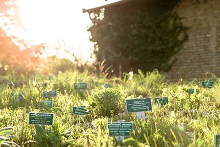 naming: name boards in the garden at summer time