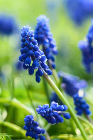 Small blue flowers at spring closeup photo photo