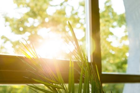sunshine: Planta verde contra la ventana con un hermoso sol Foto de archivo