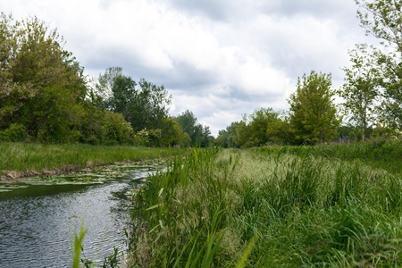 rive: Small river with green grass at cloudy weather